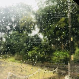 雨の中に木がある緑の野原の接写の写真・画像素材[2180752]