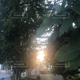 木のクローズアップの写真・画像素材[2319089]