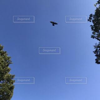 空の写真・画像素材[2616554]