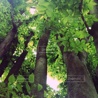 森の中の木の写真・画像素材[2880904]