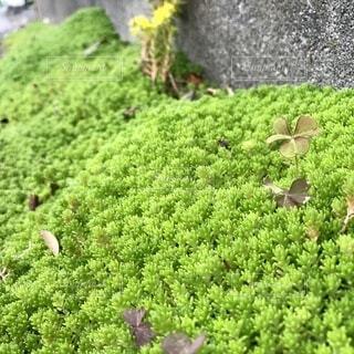 花園のクローズアップの写真・画像素材[4463236]