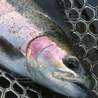 魚の写真・画像素材[2035851]