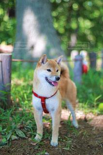 犬の写真・画像素材[2037361]