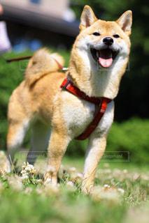 犬の写真・画像素材[2037363]