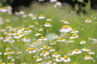 花のクローズアップの写真・画像素材[2341253]
