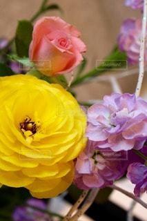 花の写真・画像素材[78536]