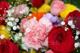 花の写真・画像素材[78542]