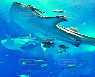 美ら海水族館の写真・画像素材[2042099]