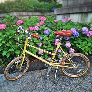 ブルーノと紫陽花の写真・画像素材[2169621]