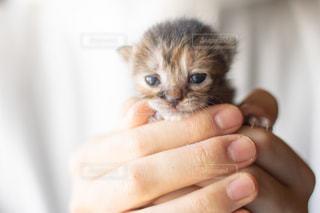 手に包まれる子猫ちゃんの写真・画像素材[2038656]
