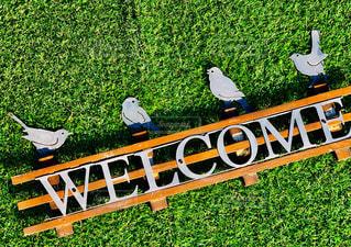 緑と小鳥さん*の写真・画像素材[2042233]