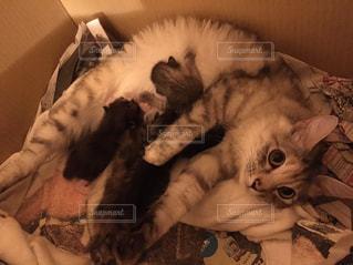猫の写真・画像素材[2041530]