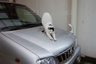 猫 - No.241484
