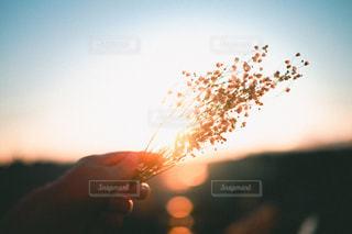 家から撮った花の写真・画像素材[2042265]