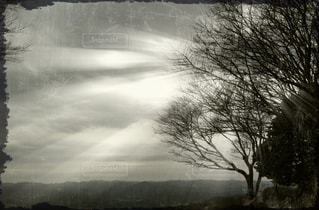 自然の写真・画像素材[171287]