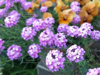 春のガーデンの写真・画像素材[2041927]