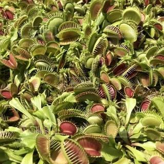 花のクローズアップの写真・画像素材[2392699]