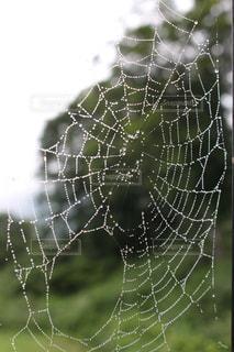 雨で濡れたクモの巣の写真・画像素材[2043607]