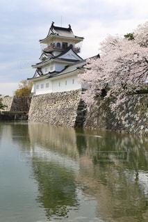富山城と満開の桜の写真・画像素材[2045092]