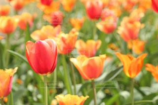 赤とオレンジ色の組み合わせの写真・画像素材[2065325]