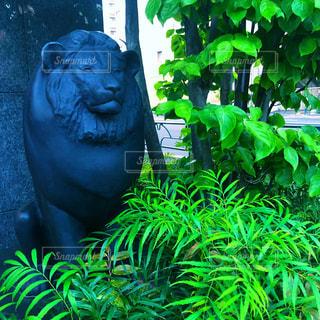 ライオンの像の写真・画像素材[2106309]