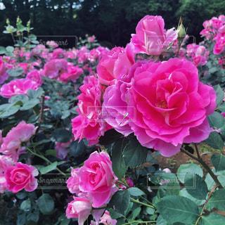 花の写真・画像素材[2122793]