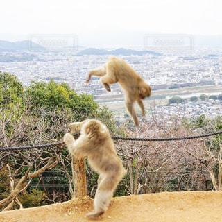 猿の写真・画像素材[3009194]