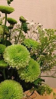 花の写真・画像素材[118124]