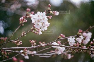 花の写真・画像素材[2043974]