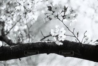 花の写真・画像素材[2043976]