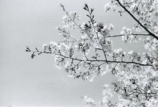 自然の写真・画像素材[2043977]