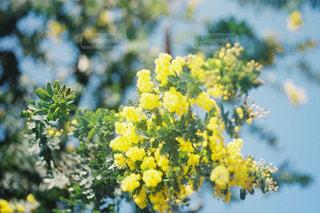 花の写真・画像素材[2044042]