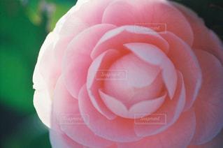 花の写真・画像素材[2044045]