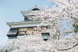 熊本城の写真・画像素材[2454742]