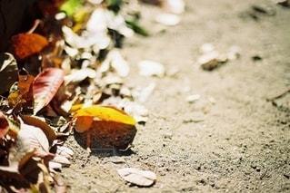秋の写真・画像素材[2648685]