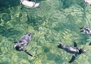 動物の写真・画像素材[2649971]