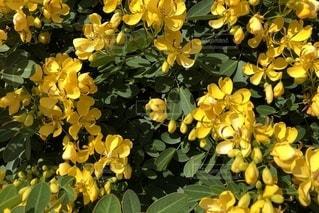 花の写真・画像素材[2678628]