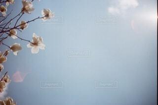 空の写真・画像素材[3788023]