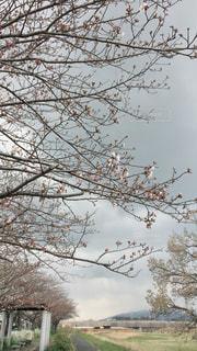 春の兆しの写真・画像素材[2044316]