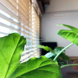 Office greenの写真・画像素材[2046825]