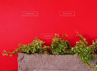 赤と緑の写真・画像素材[2052154]