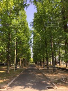 夏の並木道の写真・画像素材[2046856]