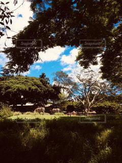 自然の写真・画像素材[2053801]