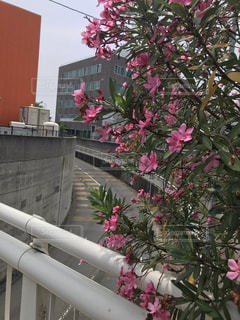 ピンクの花が見える道路の写真の写真・画像素材[2241331]