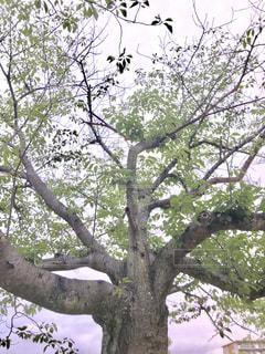 木の写真の写真・画像素材[2251792]