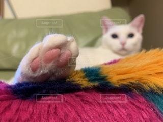 猫のにくきゅうのアップの写真の写真・画像素材[2678505]