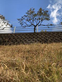 乾いた草原のクローズアップの写真・画像素材[2933467]