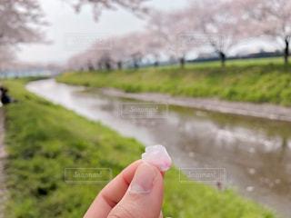 春の写真・画像素材[2047201]