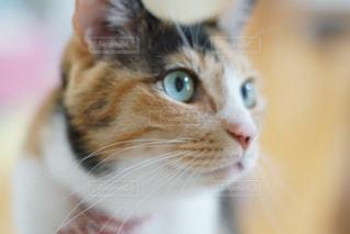 猫の写真・画像素材[2049534]