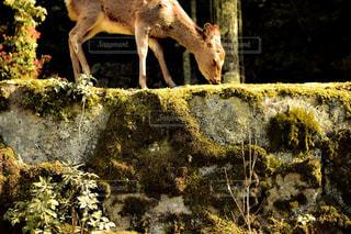 鹿さんの写真・画像素材[2049584]